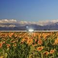 Photos: ヒマワリ畑と高速