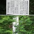 Photos: 長篠設楽原合戦場(新城市)織田信忠本陣