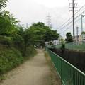Photos: 小牧山城(小牧市営 史跡小牧山公園)北面水堀・土塁