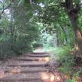 Photos: 小牧山城(小牧市営 史跡小牧山公園)登城路(搦手道)