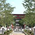 鶴岡八幡宮 段葛(鎌倉市)