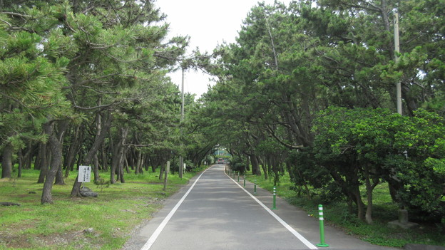 千本松(沼津市営 千本浜公園)