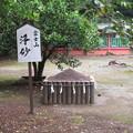 富士山本宮浅間大社(富士宮市)浄砂