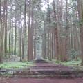 Photos: 西山本門寺(富士宮市)参道