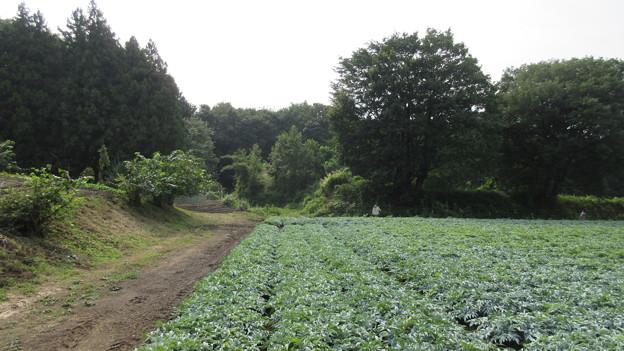 長井坂城(渋川市・昭和村)正面右方、二の丸