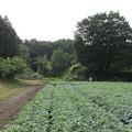 Photos: 長井坂城(渋川市・昭和村)正面右方、二の丸