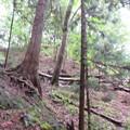 Photos: 郷原城/岩櫃山(東吾妻町)