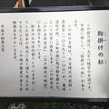 Photos: 大宮八幡宮参道(杉並区)源義家鞍掛けの松