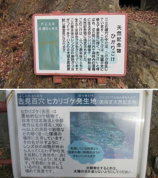 写真: 吉見百穴(埼玉県比企郡吉見町)ヒカリゴケ