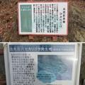 Photos: 吉見百穴(埼玉県比企郡吉見町)ヒカリゴケ