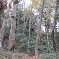 松山城(埼玉県比企郡吉見町)春日郭を振り返る