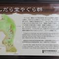 Photos: 名越切通(逗子市)まんだら堂やぐら群