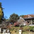 大庵寺(佐野市)