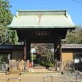 写真: 豪徳寺/世田谷城(世田谷区)山門