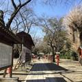 鷲宮神社(久喜市)参道