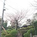 Photos: 17.03.06.護国寺(大塚5丁目)