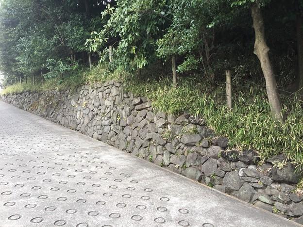 Photos: 護国寺(大塚5丁目)おっと…?