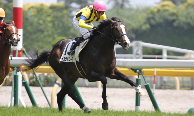 Photos: イスラボニータ(3回東京2日 5R メイクデビュー東京(2歳新馬)出走馬)+蛯名正義