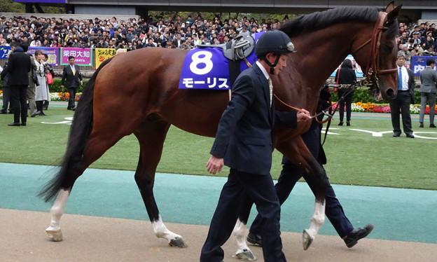 モーリス(4回東京9日 11R 第154回 天皇賞(秋)(GI)出走馬)