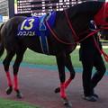 Photos: ノンコノユメ(10回川崎4日 11R 農林水産大臣賞典 第16回 JBCクラシック(GI)出走馬)
