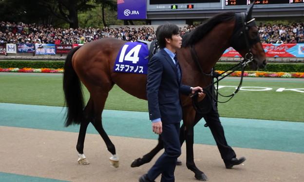 ステファノス(4回東京9日 11R 第154回 天皇賞(秋)(GI)出走馬)