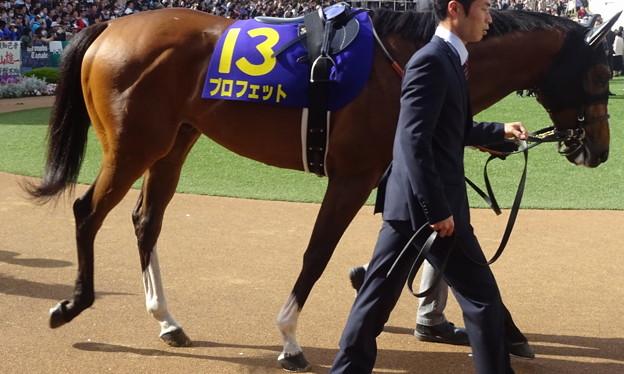 Photos: プロフェット(3回中山8日 11R 第76回 皐月賞(GI)出走馬)