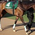 写真: トーセンビクトリー(2回中山6日 11R 第35回 ローレル競馬場賞中山牝馬ステークス(GIII)出走馬)