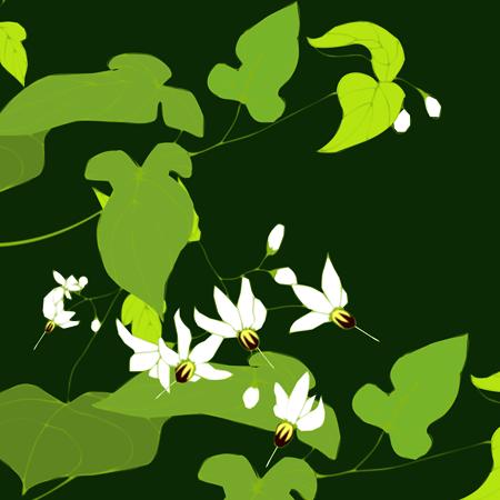 鵯上戸の花
