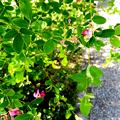 Photos: 萩
