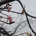 Photos: 帰り花