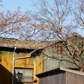 写真: 三津散策
