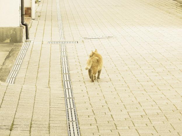 写真: 伊予の野良猫