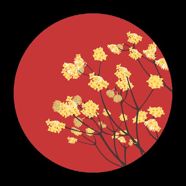 写真: 三椏の花