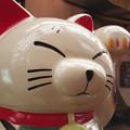 写真: 元パレットプラザの看板猫