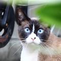 写真: ~ブルーアイで見つめて~