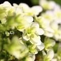 Photos: ~ ・・・ ~
