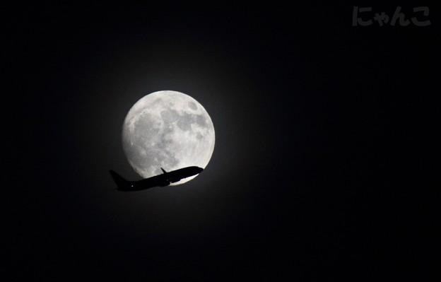 写真: ~月光フライト~