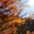 ~秋色の羽根~