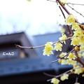 写真: ~冬の香り~
