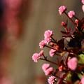 写真: ~壁の花~