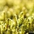 写真: ~緑の絨毯~
