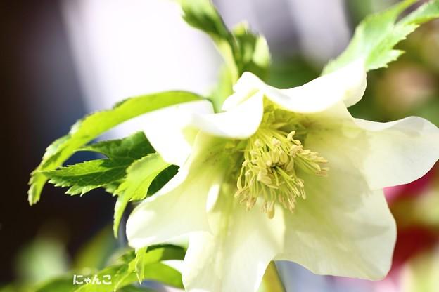 Photos: ~White Love~