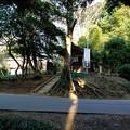 Photos: 地蔵尊に光の道