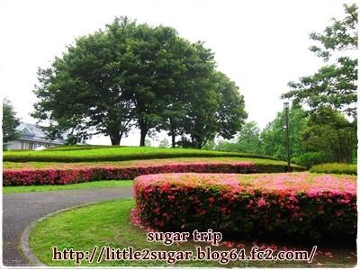 柏の葉公園のバラ園1-3