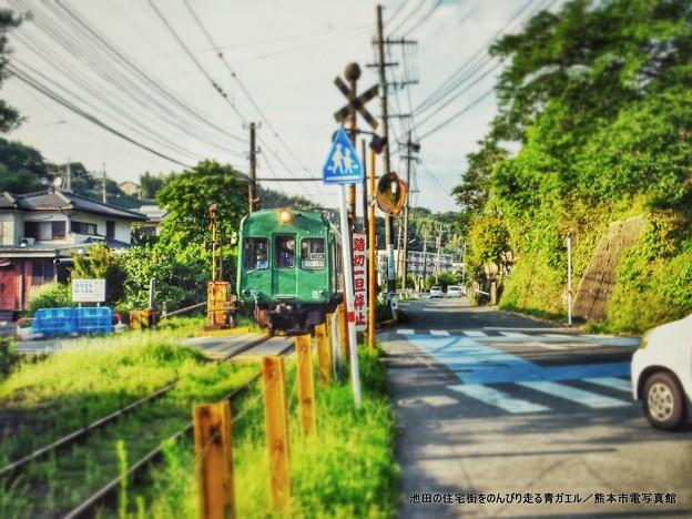 池田(熊本市西区)の住宅街をのんびり走る青ガエル。