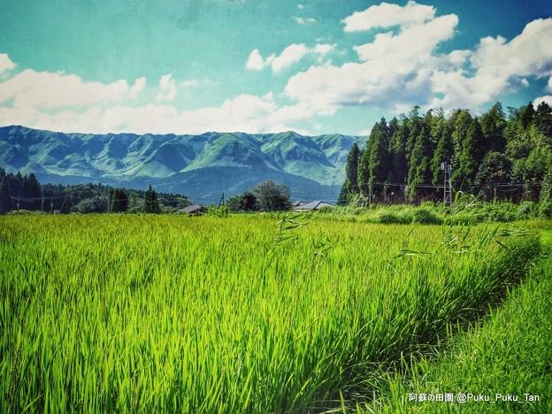 阿蘇の田園。