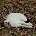 夏は小まめに睡眠補給!