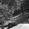 写真: 秋を歩く
