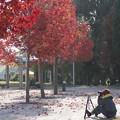 Photos: 秋を撮る