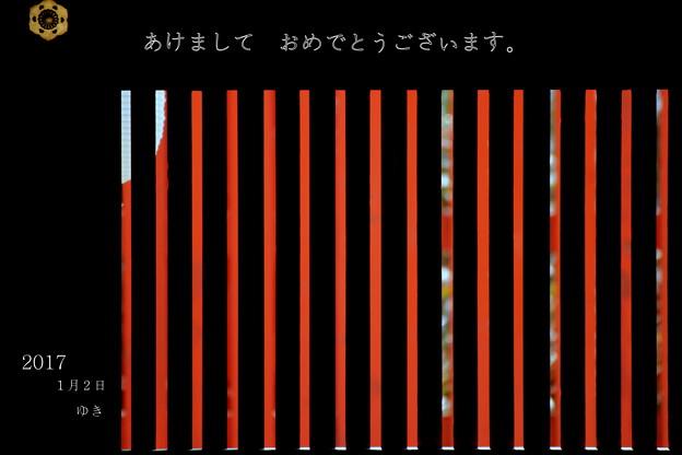 写真: 格子の向こうの紅